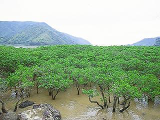 구로시오노모리 맹그로브파크 (黒潮の森マングローブパーク)…