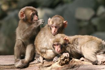 다카사키(高崎)산 자연동물원