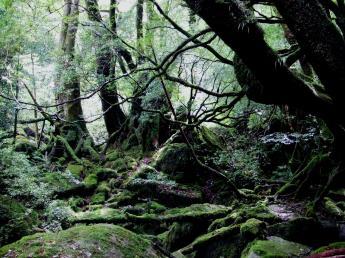 야쿠시마 자연체험・환경학습