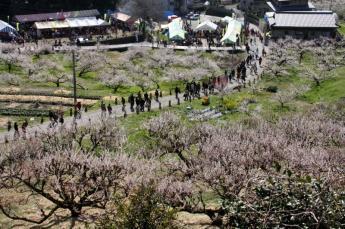 유메타치바나 관매회(観梅会)