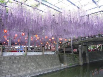나카야마 오후지(큰 등나무)마쓰리