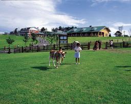 다카치호 목장